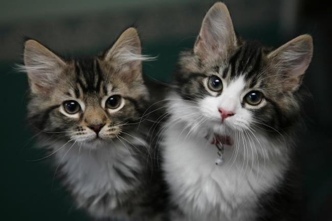 Prepare For Fleas Outbreak Pets At Home Boss Warns Basingstoke Gazette