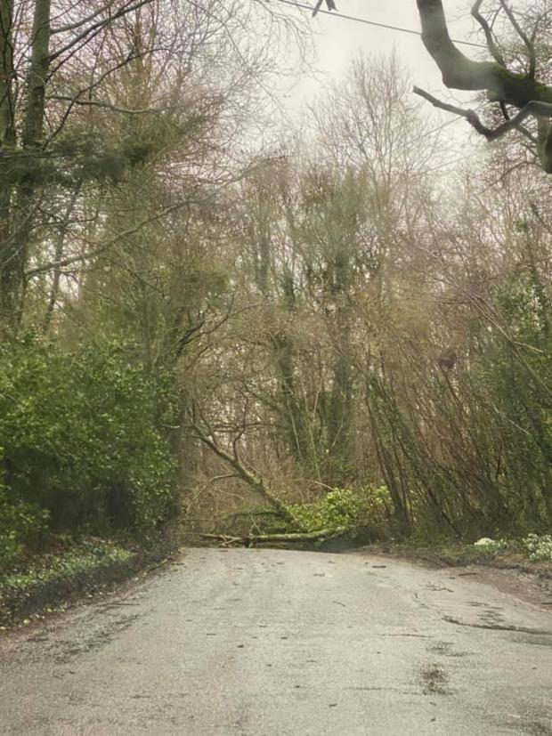 Basingstoke Gazette: A large tree blocking the road near Test Valley Golf Club in Overton. Credit: Laura Durnford