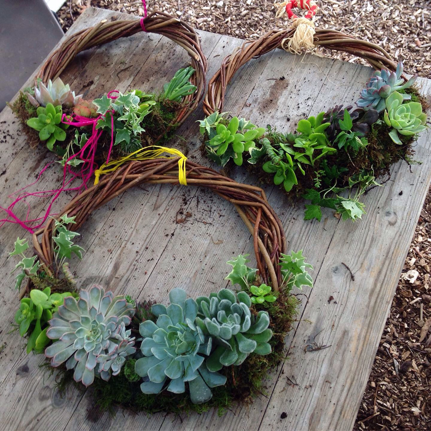 Succulent Wreath Workshop – with Tracy Standish