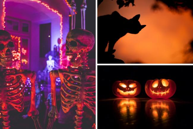 Whether you prefer bats or pumpkins, thee's plenty to do this Halloween. Credit: Unsplash
