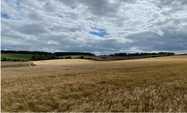 Fields around Cliddesden, which could be transformed if the Upper Swallick plans are approved.