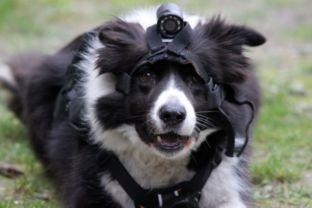 Search dogs go hi-tech