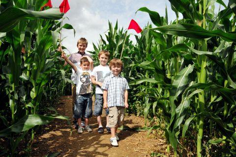 Basingstoke Gazette: Callum Attwood, 11, Sid Doublet, five, Joshua Attwood, seven, and Daniel Fagan, four, in the maize maze