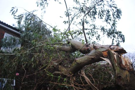The fallen tree at the Pershore Road home