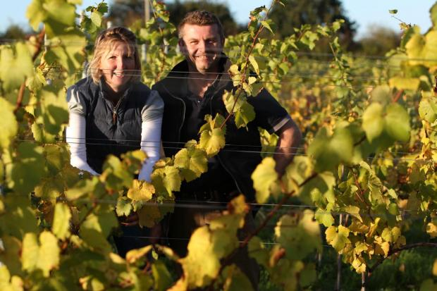 Gussie and Robert Raimes at their vineyard for the first harvest of Chardonnay grapes.