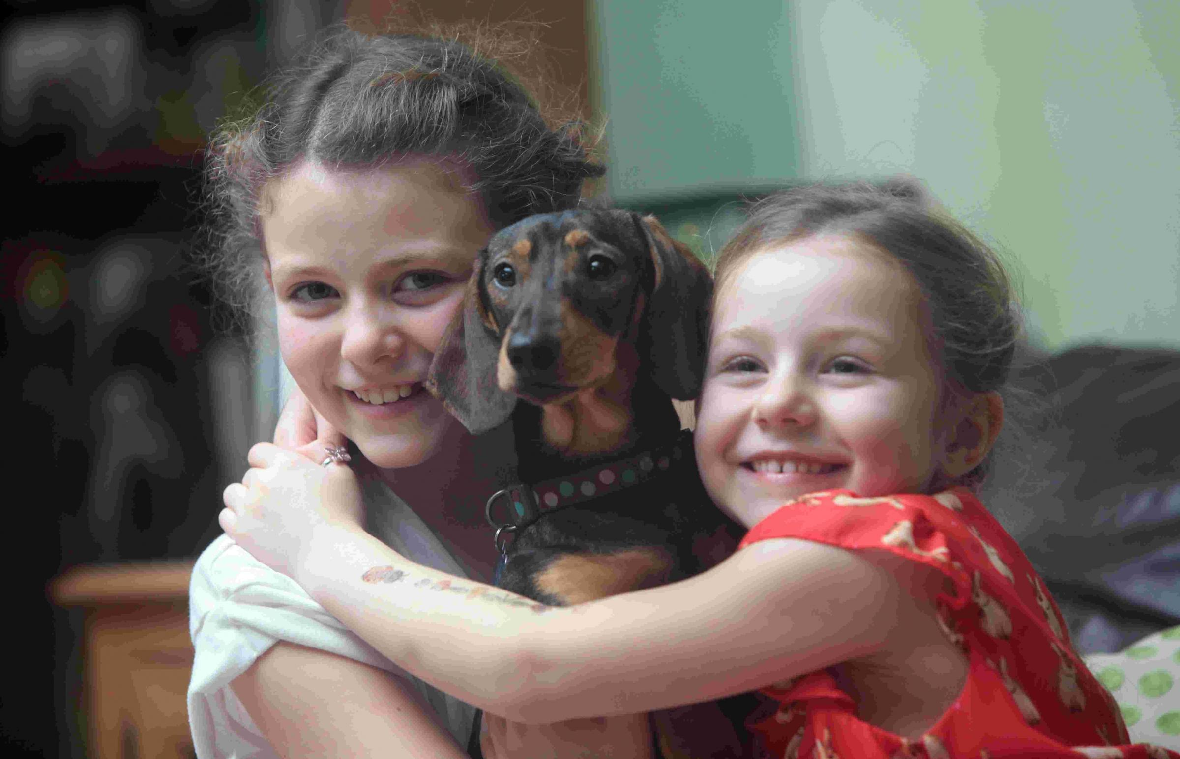 Puppy reunited with Hampshire family after four days on the run