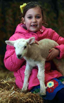 Visitors enjoy lambing day