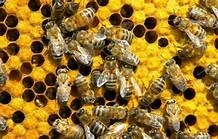 Basingstoke Gazette: Bee Keeping for Beginners Talk