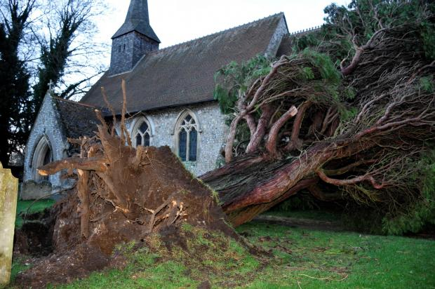 Storms brought down this treet at St Thomas' Church, Worting Road, on Friday night