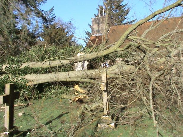 Florence Nightingale's tomb among the branches of a fallen tree at St Margaret's Church, Wellow