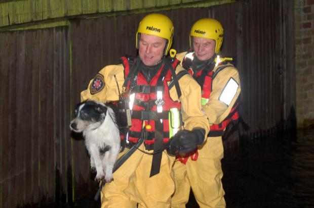 Firefighters rescue a dog last night in flooded Buckskin. Picture by Paul King