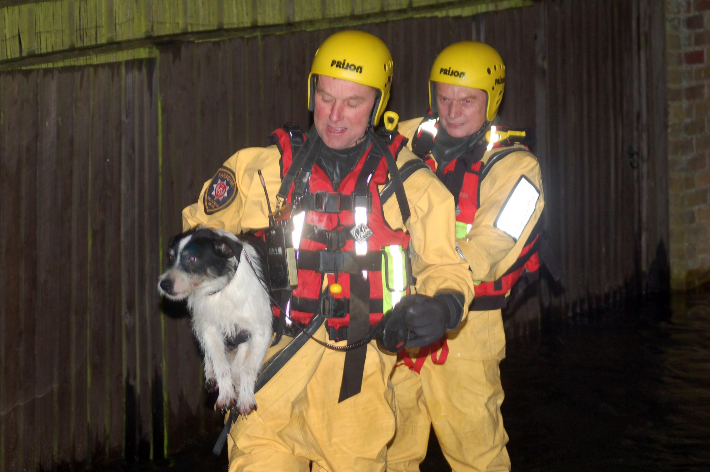 Firefighters rescue a dog last night