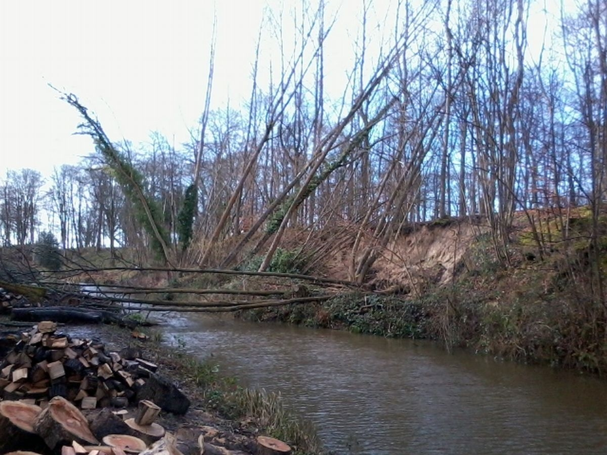 Trees have fallen across the canal and land has slipped on either side of the waterway