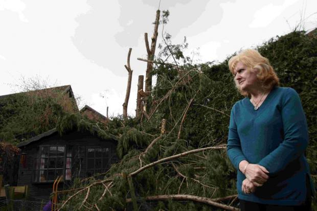 The 'offending' tree, which sat at the bottom of John and Gillian Chapman's back garden in Sutton Scotney, was cut down in February by Hampshire County Council after complaints from neighbours during high winds