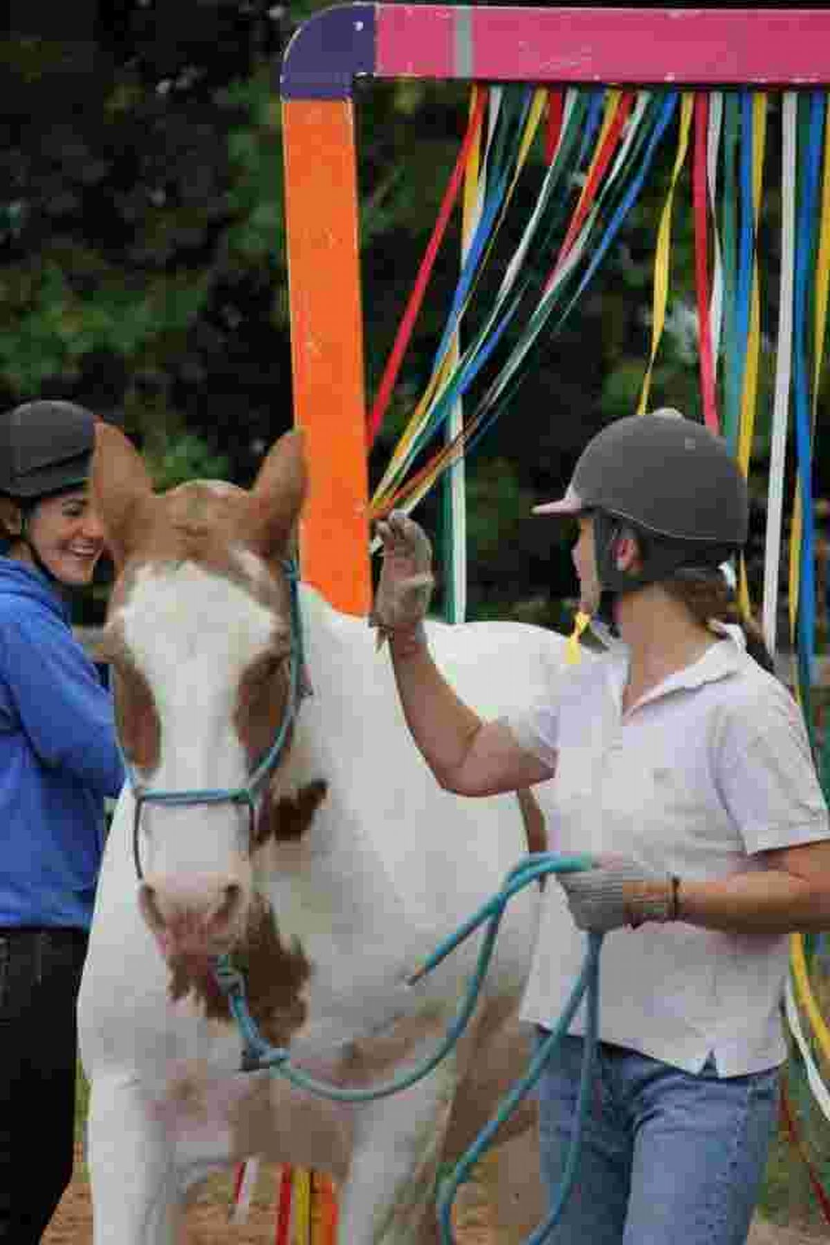 Lucy Morgans, owner of Equine Intelligence, at Homestead Farm in Houghton, set up the new practice offering training sessions.