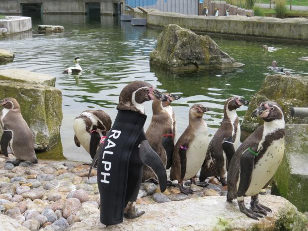 Basingstoke Gazette: Ralph in the penguin enclosure