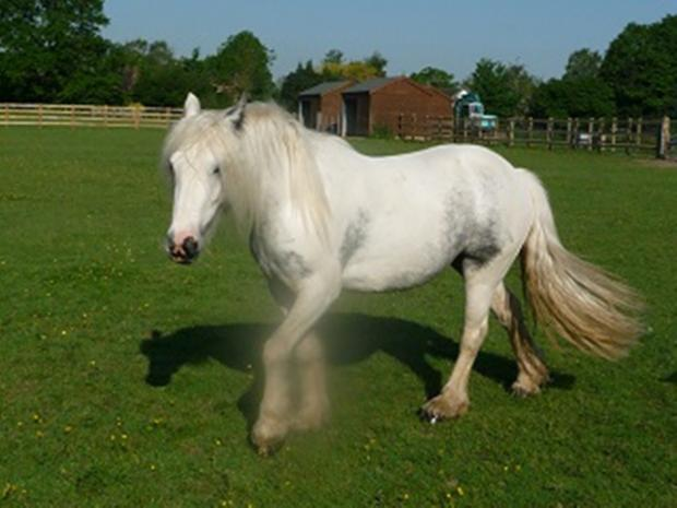 Neglected horse found in Basingstoke one of thousands rescued in equine crisis