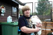Shirley King with Houdini, another of the rabbits cared for by STARescue Picture by Chris Moorhouse