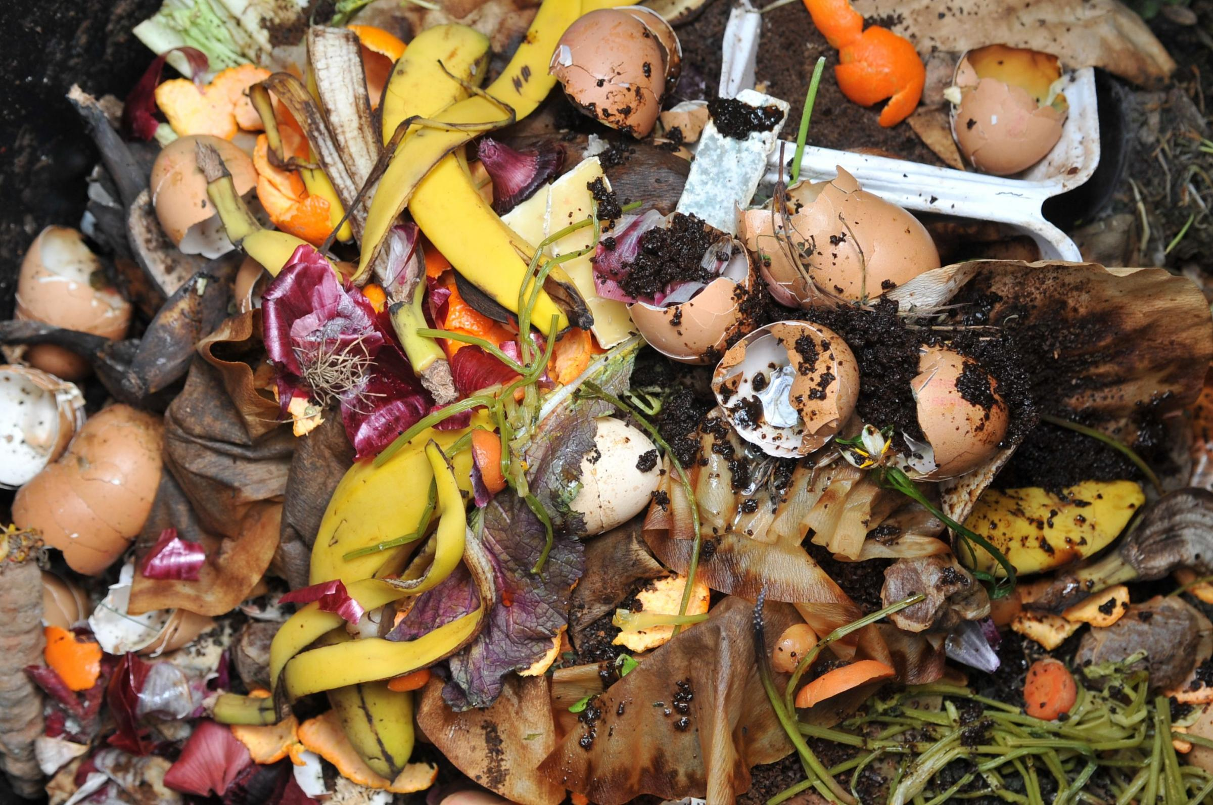 Plan to bring in food waste collections