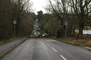 UPDATE: Trees down as high winds hit Hampshire