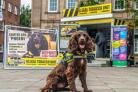 One of the sniffer dogs which will be at the event